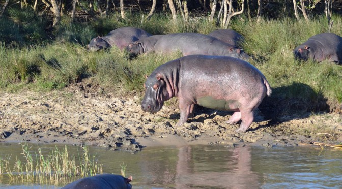 dumami lodge, accommodation review, accomodation, empangeni, where to stay, kwazulu natal, places to stay, richard's bay, st lucia, isimangaliso wetland park, advantage tours, hippos, crocs, travel, south africa, road trip, family, kid friendly, travel with kids, road trip